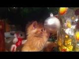 мой новогодний котик